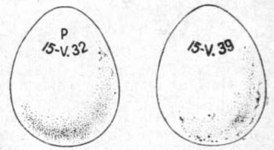 Запись на яйце